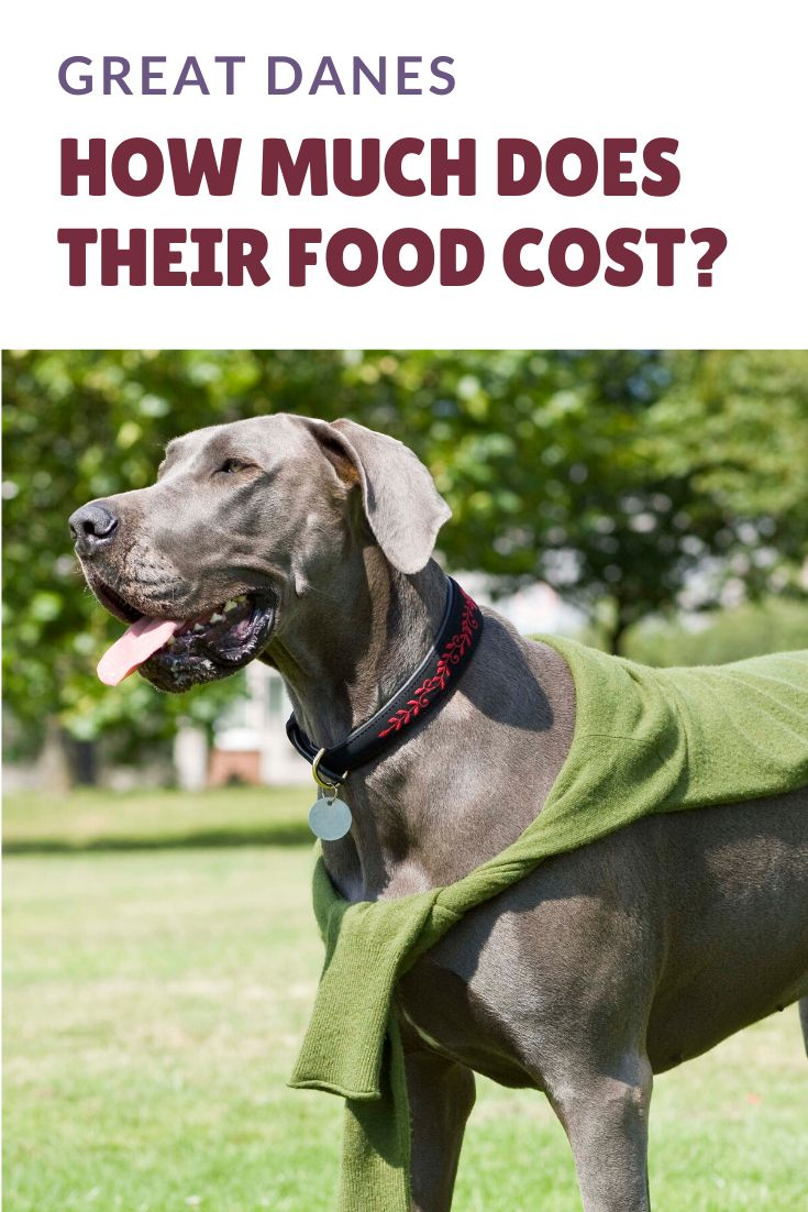 How much does it cost to feed a great dane in 2020