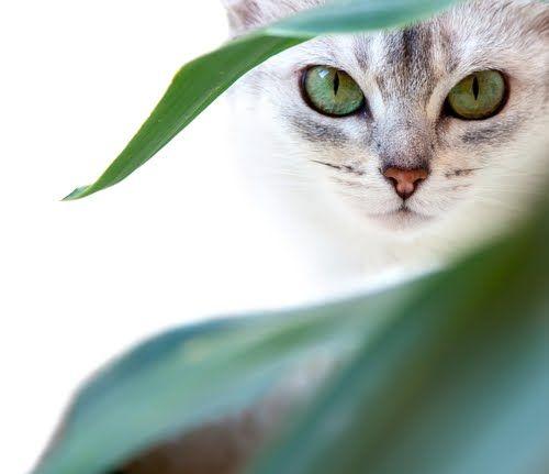 Beware of people who dislike cats  ~ Irish Proverb