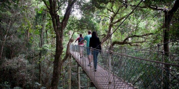 Hinterland Day Tour - Rainforest & Wildlife Tour (Gold Coast)