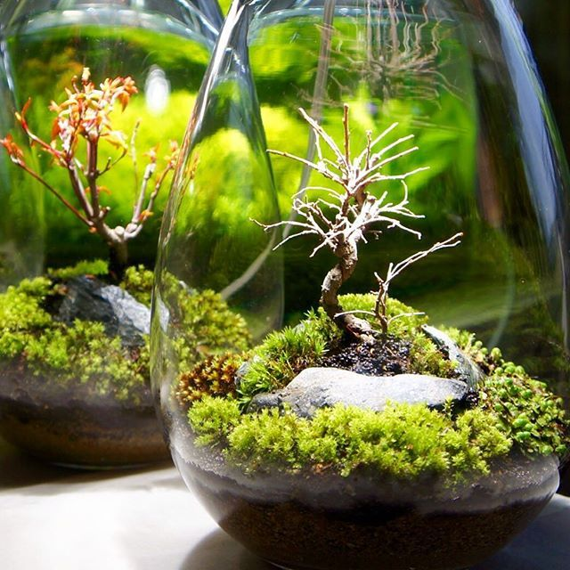 best 20 mini terrarium ideas on pinterest. Black Bedroom Furniture Sets. Home Design Ideas