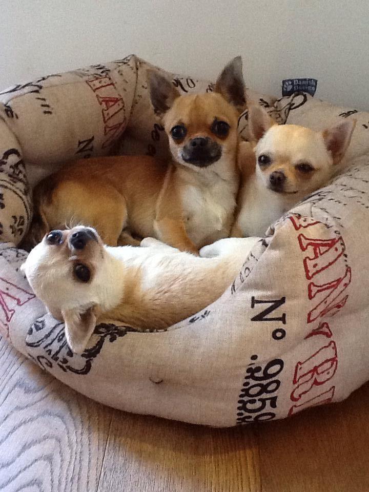 3 amigos ♥