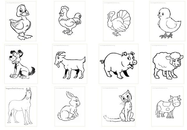 Dibujo De Un Animal Para Colorear: Animales Salvajes Y Domesticos Para Colorear