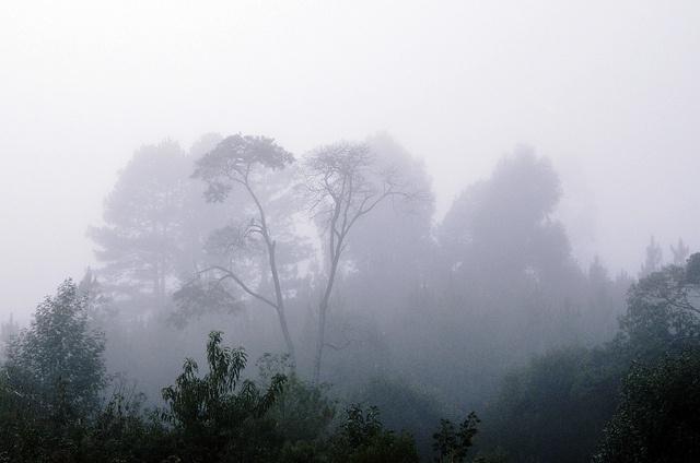 Misty Forest (Floresta Enevoada) by Gabriel_Gomes, via Flickr