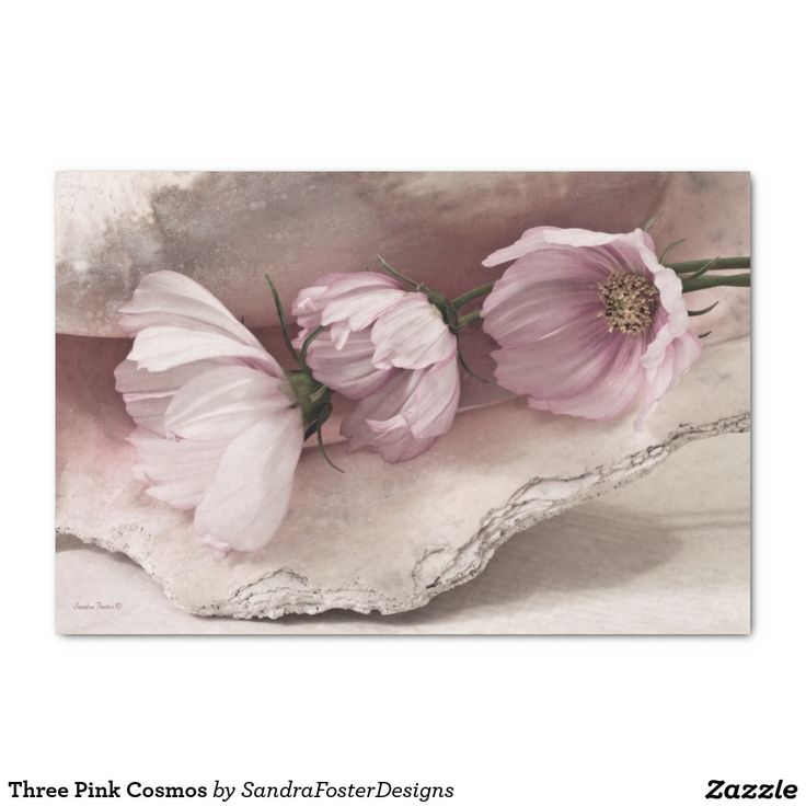 "Three Pink Cosmos 10"" X 15"" Tissue Paper"