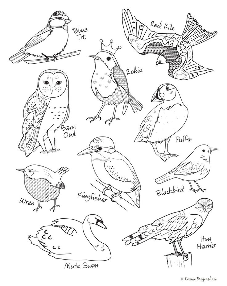 Bird illustrations by Louise Brigenshaw for Colour.In Magazine