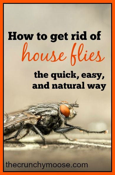 how to get rid of house flies the easy and natural way diy cleaning. Black Bedroom Furniture Sets. Home Design Ideas