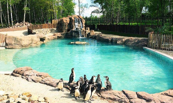 Une entrée pour 1 personne au Monde Sauvage d'Aywaille, un zoo-safari passionnant à deux pas de Liège