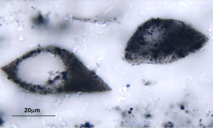 Ancient plankton-like microfossils span 2 continents