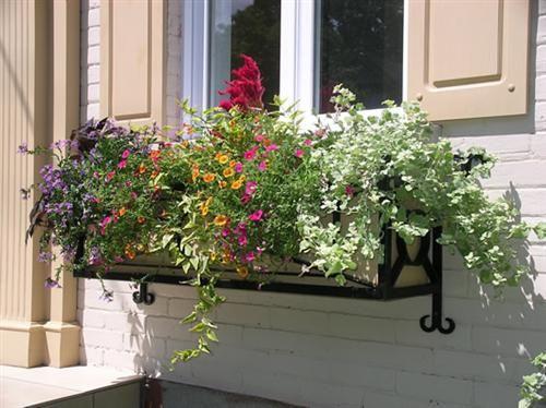 Flores na janela, lindo.