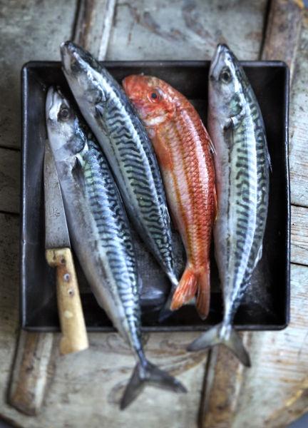 14 Health Benefits of Eating Fish Eyes
