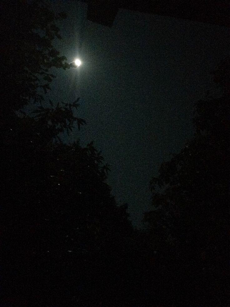 Full Moon @TheRefuge