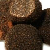 Fresh Black Winter Truffles ( Tuber melanosporum vitt ) from Urbani - $95 / oz.