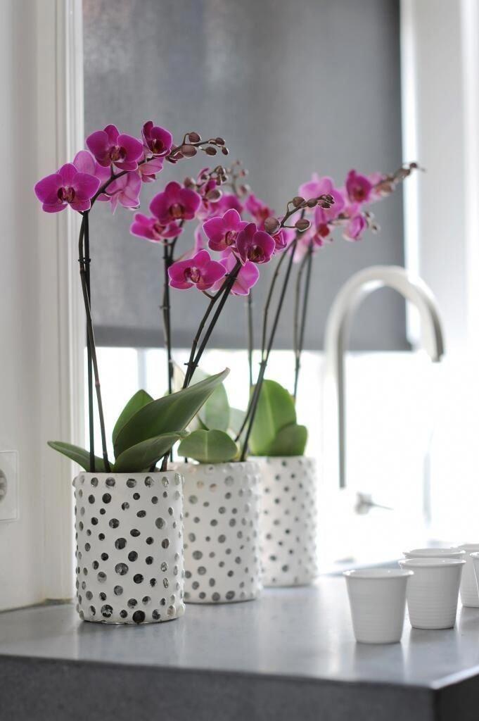 Кашпо для орхидей картинки