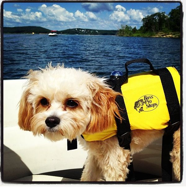 Gracie Lou The Cavapoo Boating Safety First Bassproshop