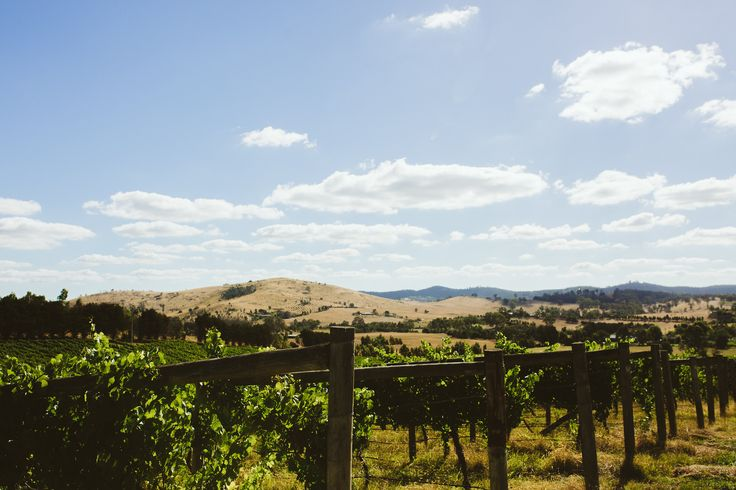 Vineyard views in the Yarra Valley