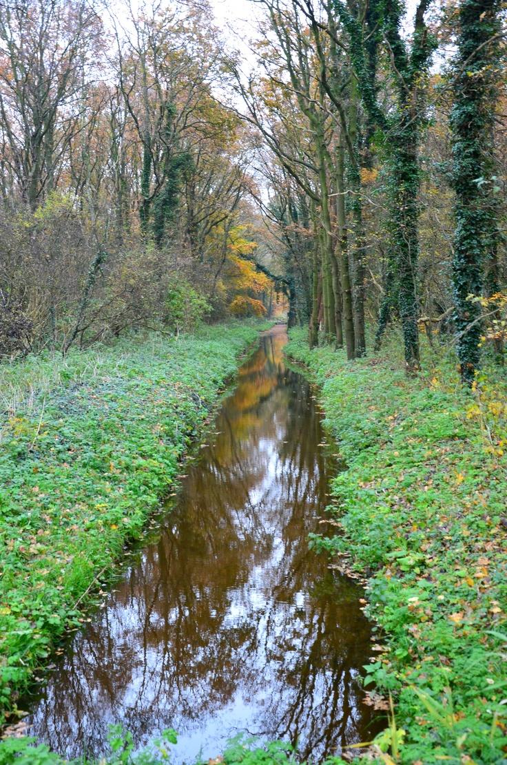 Marquette bos, Heemskerk