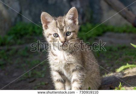 Adorable little grey striped kitten portrait outside.