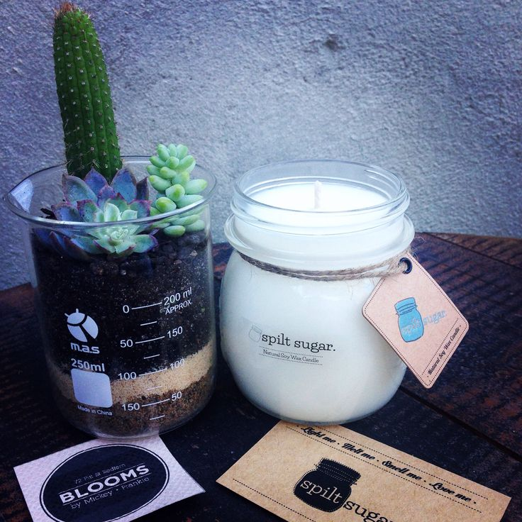 Succulents & Candles make the perfect gifts!