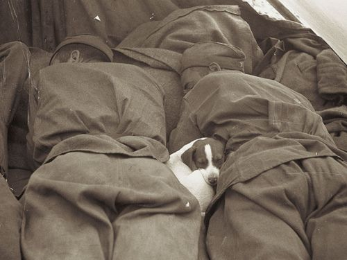 Russian soldiers sleeping with puppy, Prague, Georgy Lipskerov 1945.