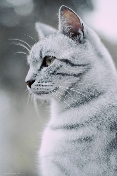 """""""The cat is an example of sophistication, minus civilization."""" --Jerry Smith"""