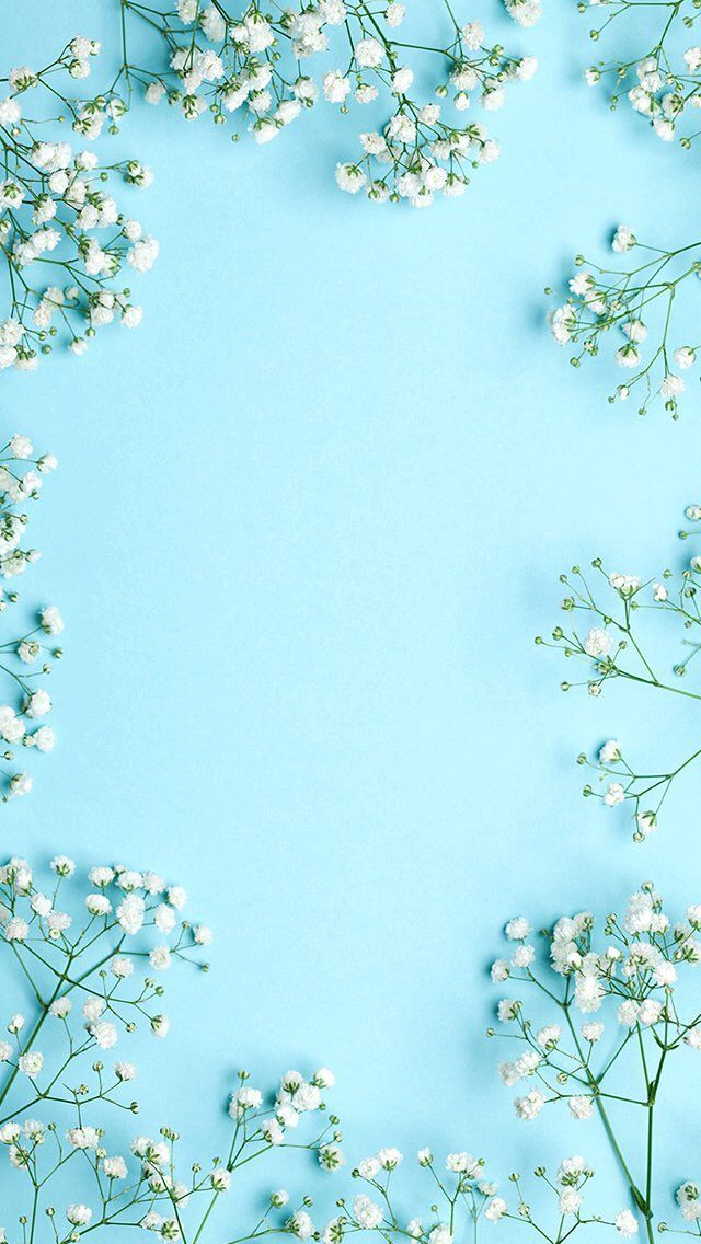 White flowers blue background