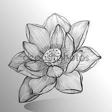 Resultado De Imagem Para Flor De Lotus Desenho Pics Flor