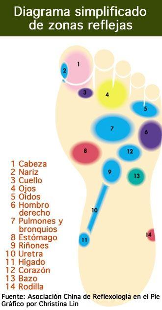 El arte de la reflexologia consiste a realizar masajes de los pies para calmar ciertos males y tensiones. Existen ciertas zonas en el p...