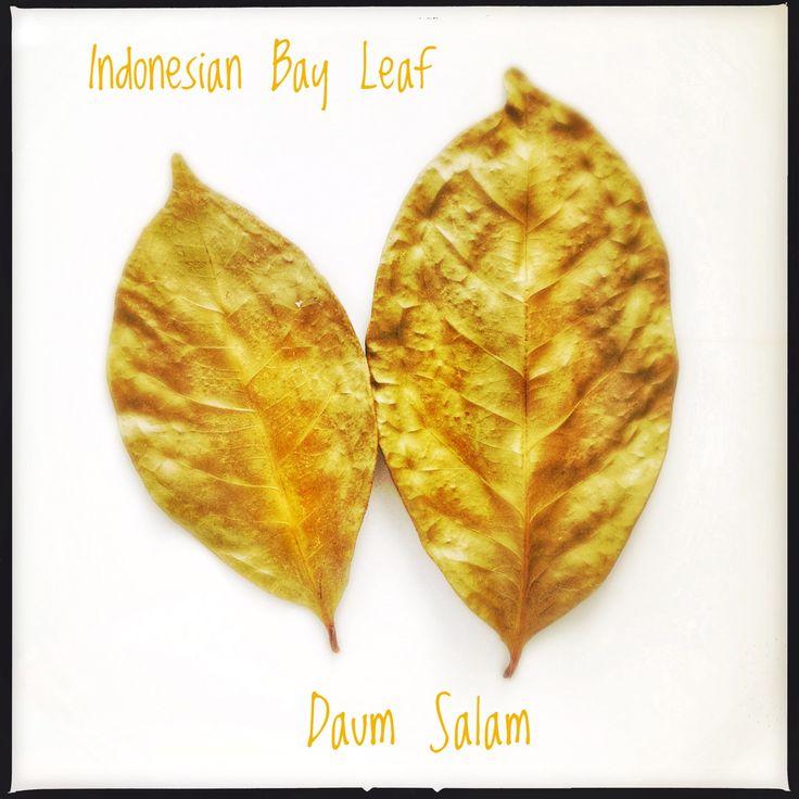 Daun Salam | Indonesian Bay Leaf