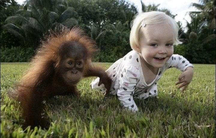 : Human Baby, Little Girls, Funny Children, Animal Pictures, Funny Pics, Funny Animal, Funny Kids, Animal Funny, Baby Orangutans