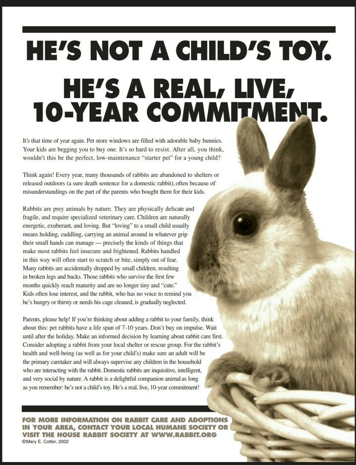 135 best Holland Lop care Guide images on Pinterest  Holland lop