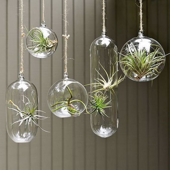 These hanging glass bubble terrariums are bound to be among the coolest decor that you ever brought into your home. Description from decoist.com. I searched for this on bing.com/images