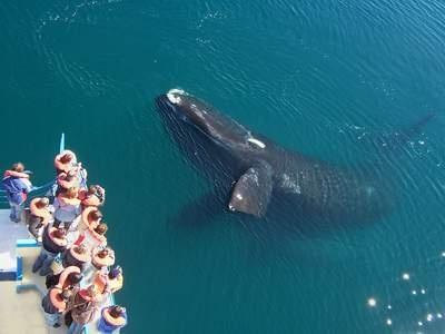 Puerto Madryn, Argentina. Avistaje de ballenas - Se pueden ver desde la playa !!!