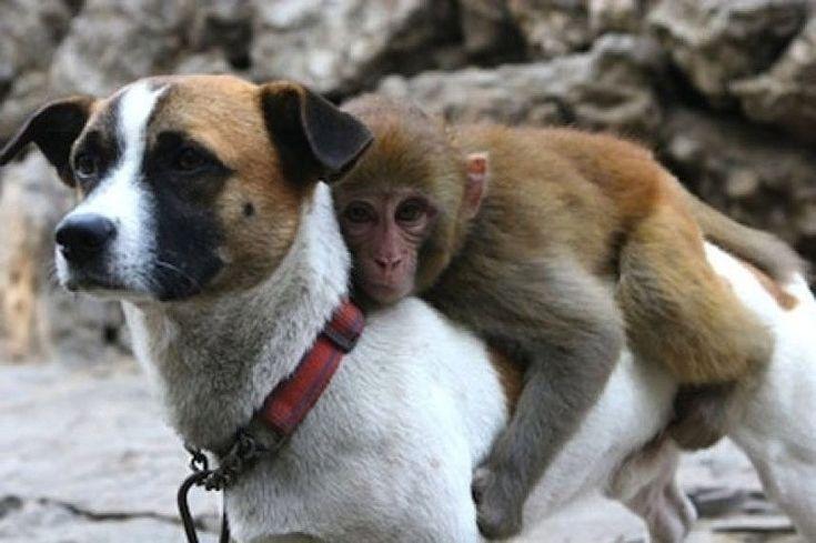 этом смешные картинки про собак и обезьян седан венге