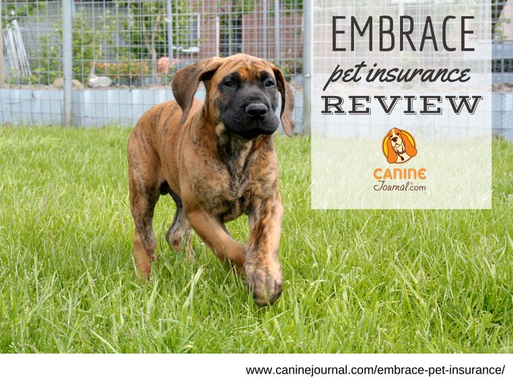 "Embrace Pet Insurance: One of the Best?  ""Each stage in a dog's life comes with its own joys, challenges, and risks. [Embrace Pet Insurance] wants to be there to help you get through it all:"""