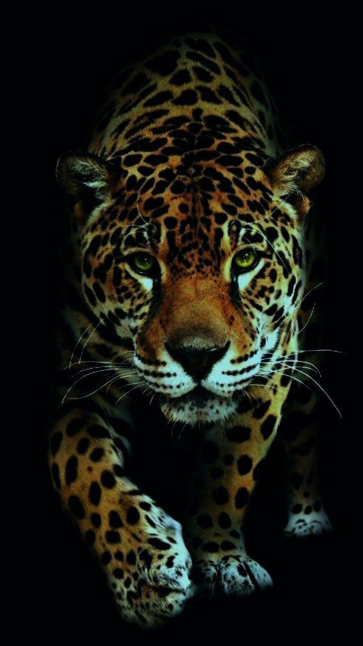 68hintergrundbild Cutecatwallpaper Hintergrundbild Kostenlos Georgekev Wallpaper Aufladen Kostenla 68huawei Jaguar Tier Schonen Katzen Tier Wallpaper