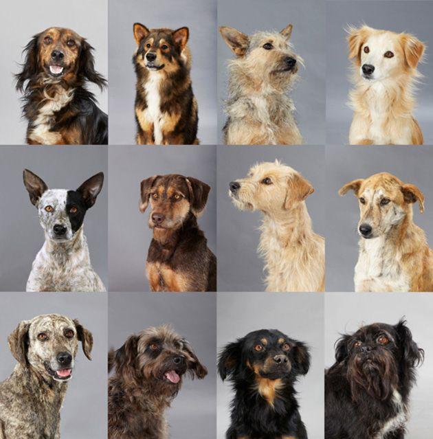 De Perros Callejeros a Razas Únicas - Territorio de Zaguates