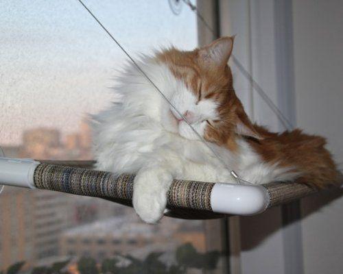 Feline Window Seats
