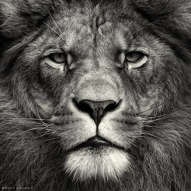 Как правило, самые сильные — это самые тихие и спокойные люди.