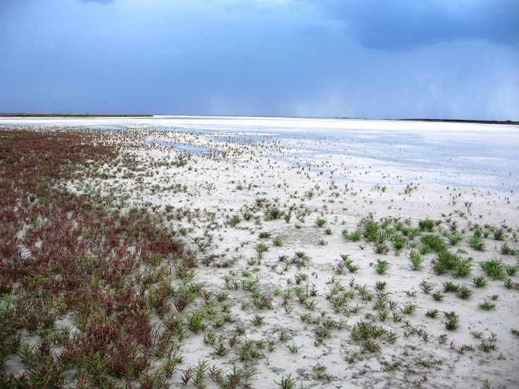 Озеро Сиваш со стороны Арабатской стрелки