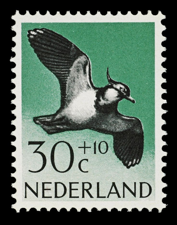 Postzegel Nederland 1961, Zomerpostzegel, Kievit