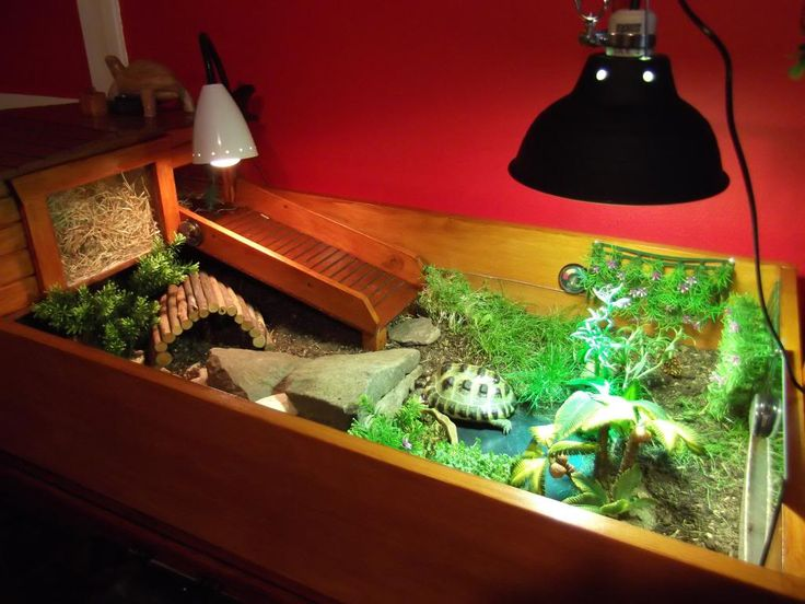 Many Many Owners Say That Their Torts Love Hiking Up u0026 Down R&s. Something & 152 best Tortoise inside and outside habitat ideas images on ... azcodes.com