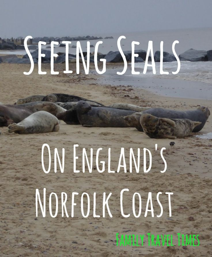 The whole family loved visiting Horsey Beach in Norfolk, because there were hundreds and hundreds of seals!