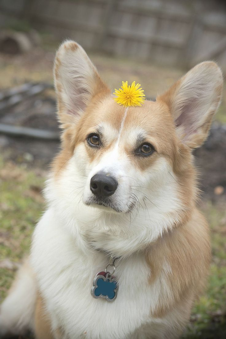 best animalspuppy dogs images on pinterest doggies long