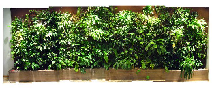 green wall - Google Search