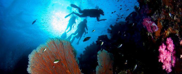 Best dive practices