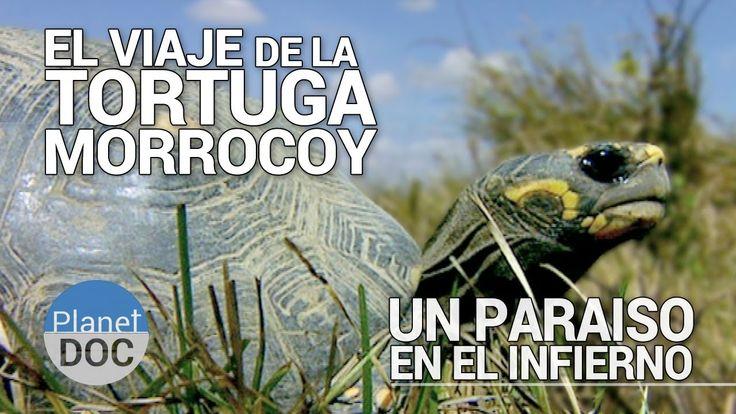 El Viaje de la Tortuga Morrocoy