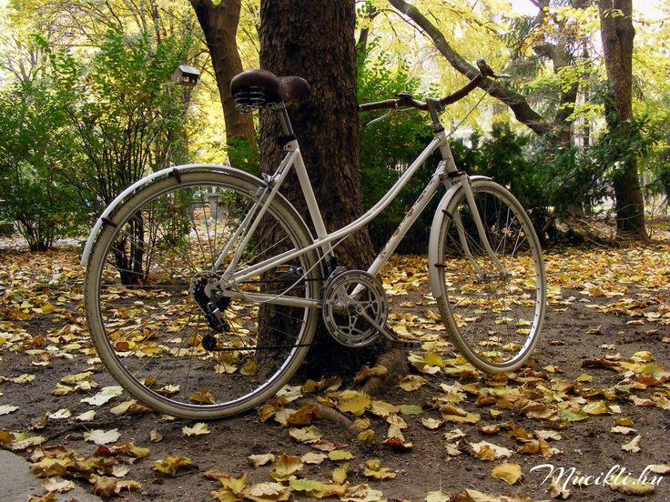 Mucikli NO.1 autumn 2