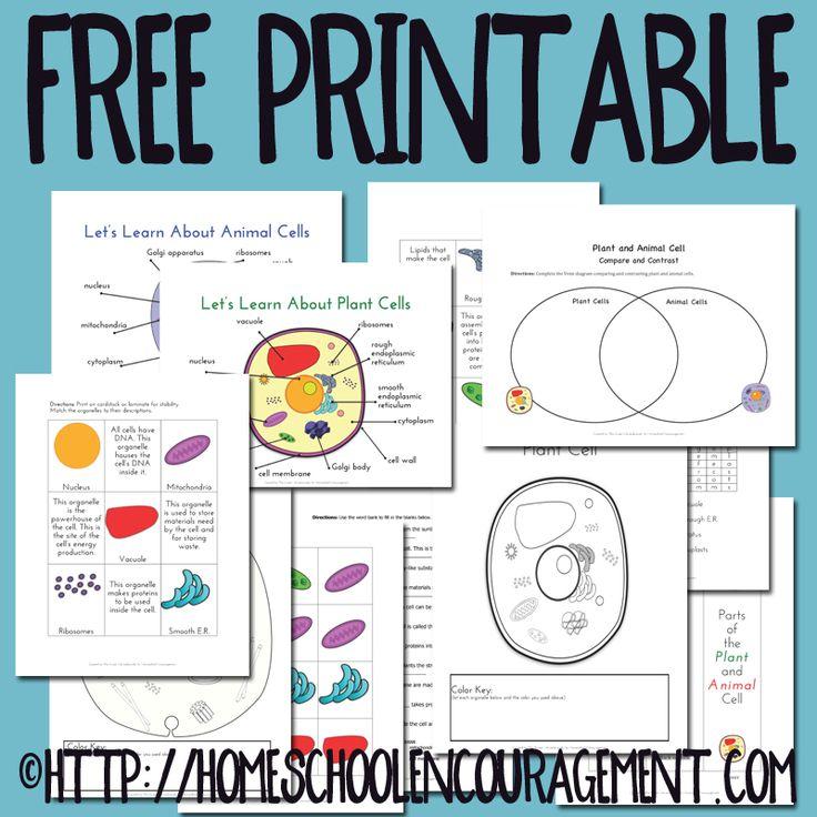 Plant and Animal Cell Printables Grades 4-6 | Sixth grade ...