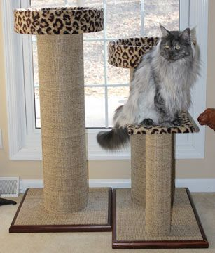 Cats like to be high and survey their territory.  Cat Perches and Condos—Perfect for Scratching and Lounging Cat condos are great for lounging and perching. Providing a multipurpose scratching surface that also works as a perch from which your kitty can survey his domain, both inside and outside, is a great idea.