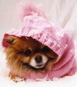 pom in a hoodie